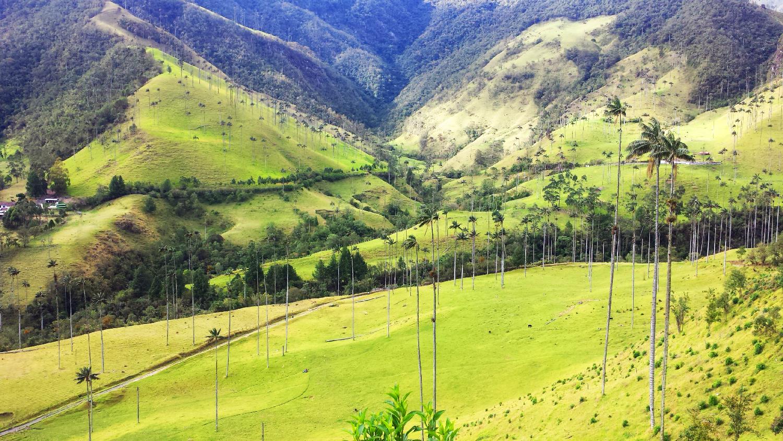 Vallée de Cocora Solento Colombie