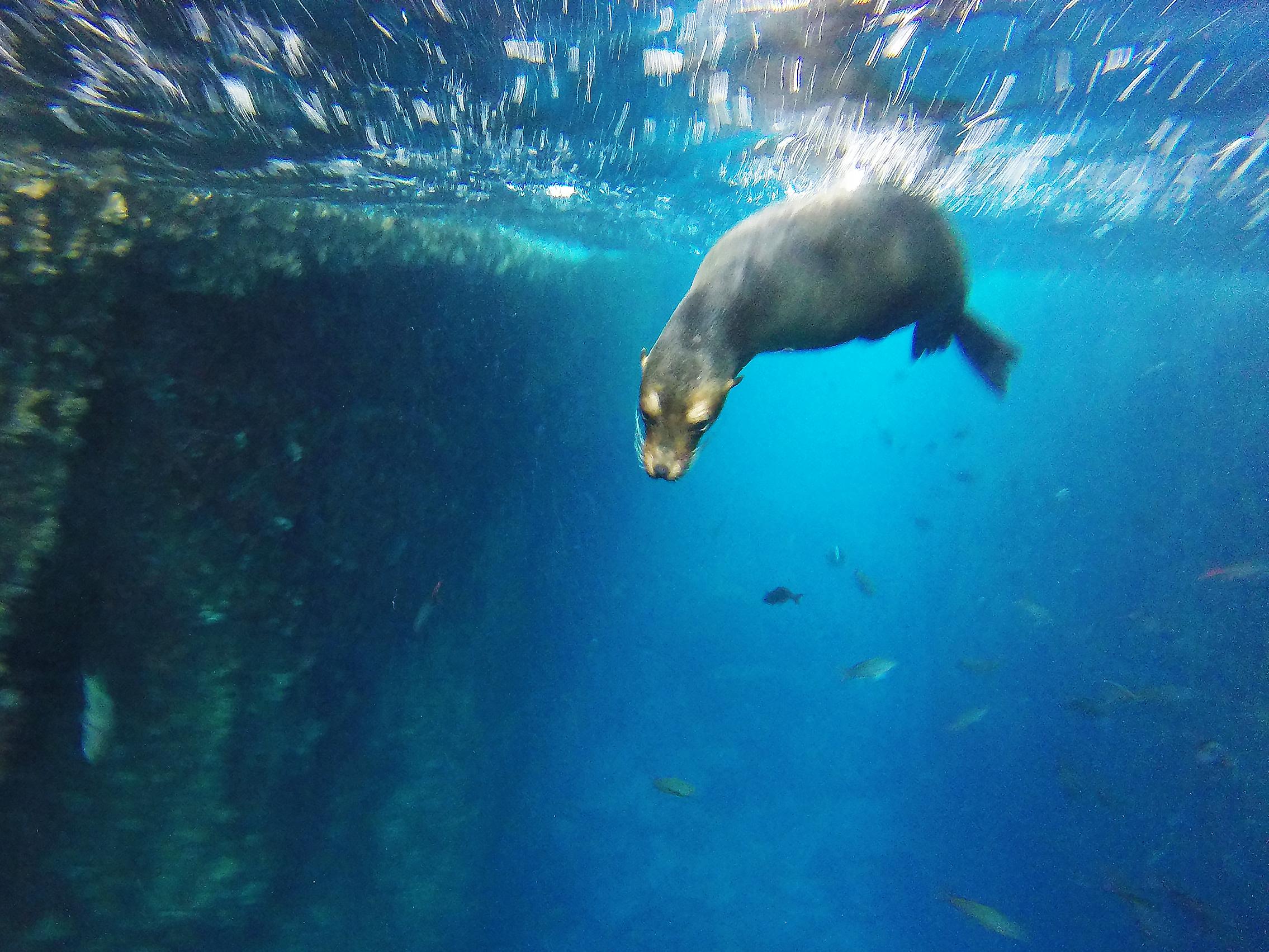 lion de mer galapagos equateur