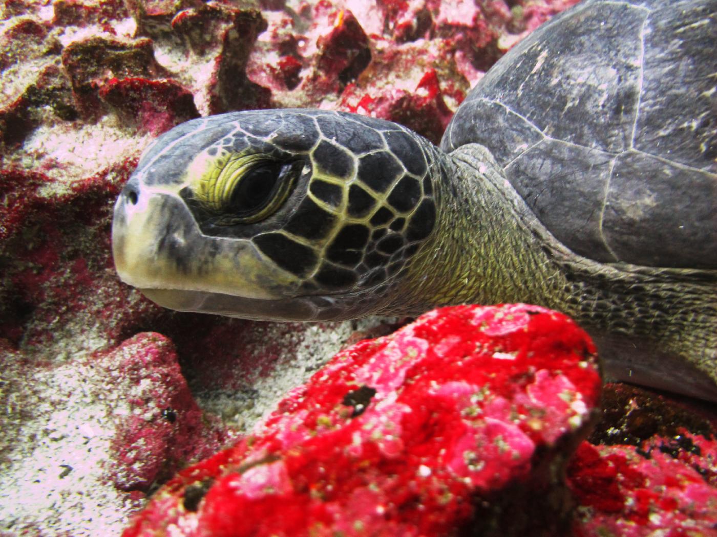 tortue geante pacifique otavalo equateur